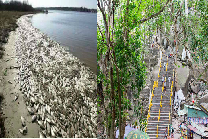 Dân tình bỏ biển lên rừng đi du lịch vi cá chết hàng loạt