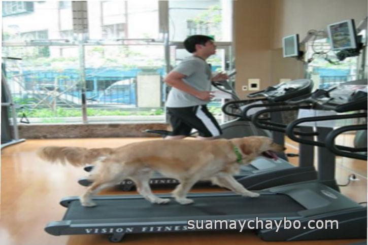 Trào lưu mua máy chạy bộ cho vật nuôi thú cưng tại nhà