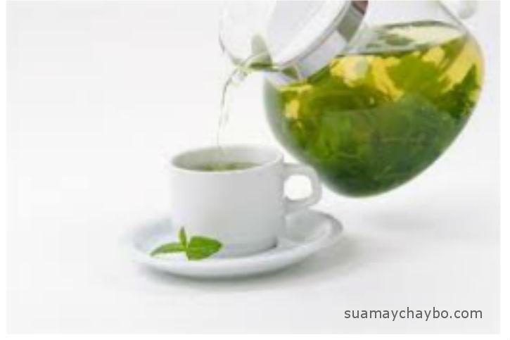 Những lợi ích từ uống nước lá chè xanh hàng ngày